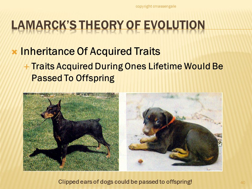 Lamarck's Theory of Evolution