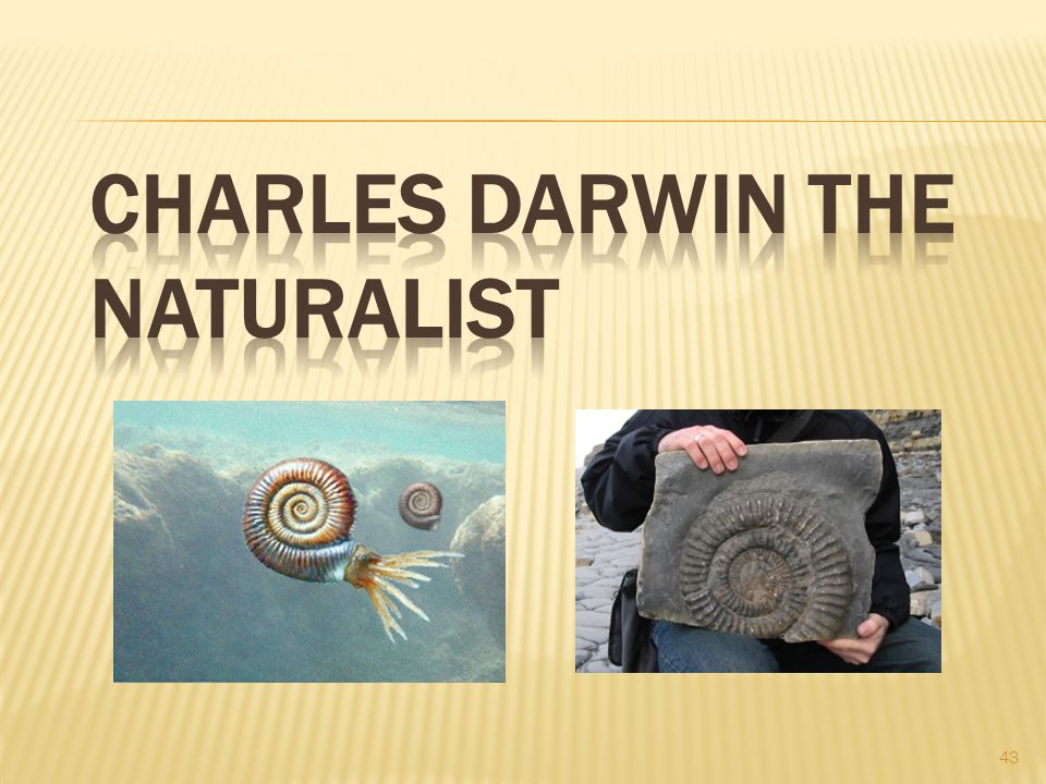 Charles Darwin the Naturalist