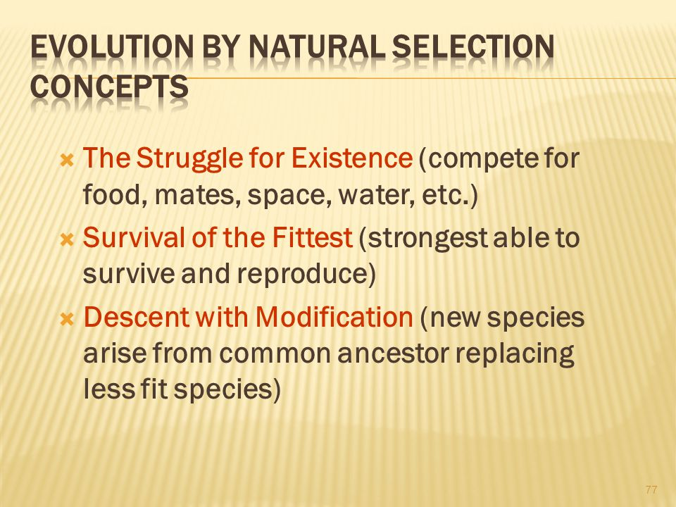 Evolution By Natural Selection Concepts