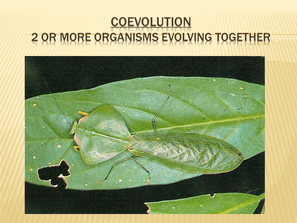 Coevolution 2 or more organisms evolving together