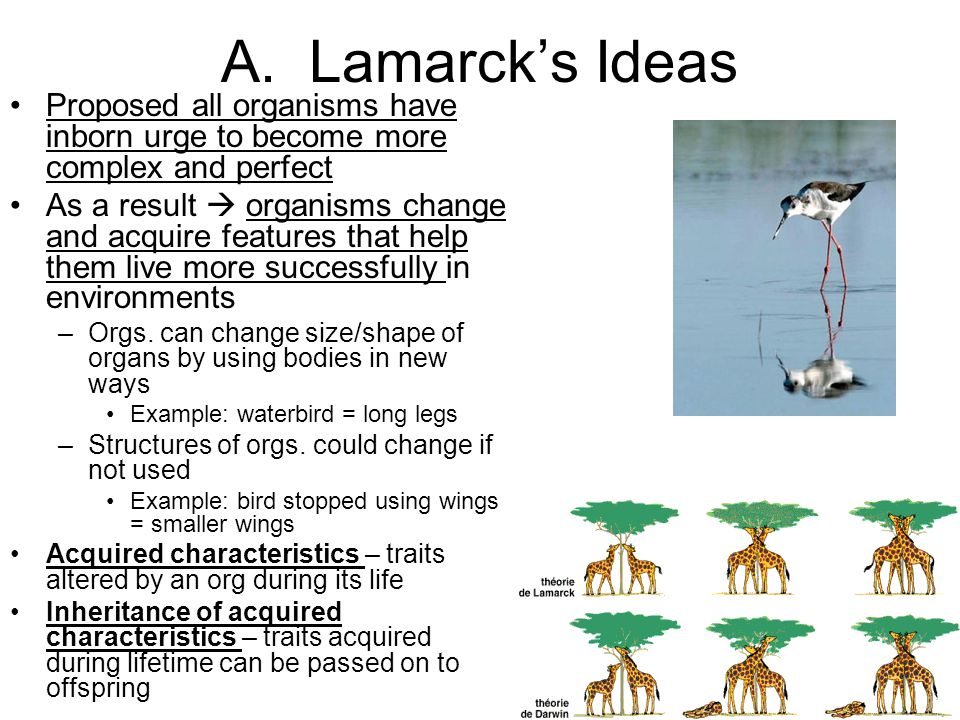A. Lamarck's Ideas Proposed all organisms have inborn urge to become more complex and perfect.