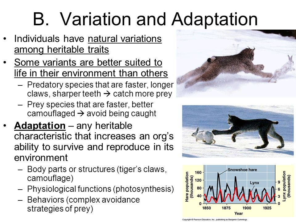 B. Variation and Adaptation