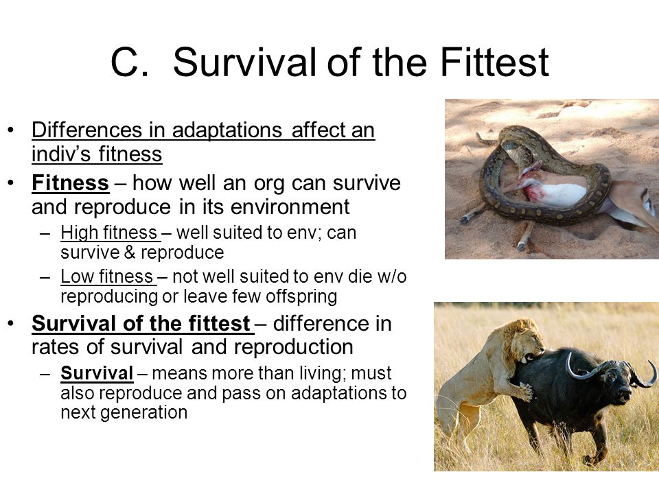 C. Survival of the Fittest