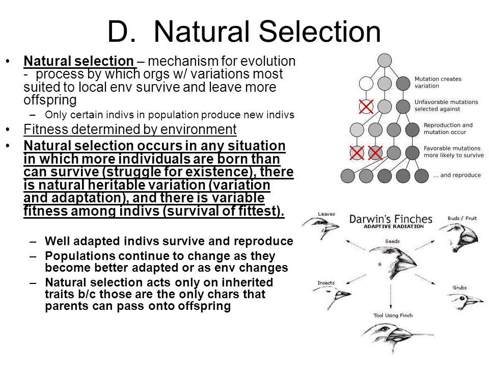 D. Natural Selection