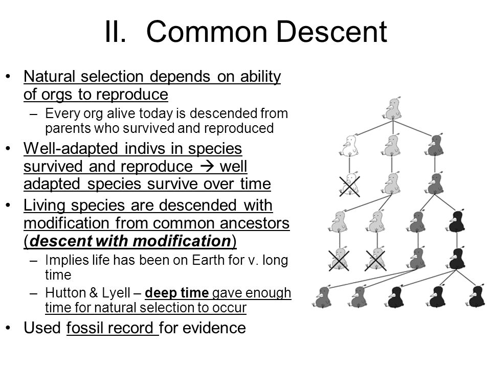 II. Common Descent Natural selection depends on ability of orgs to reproduce.