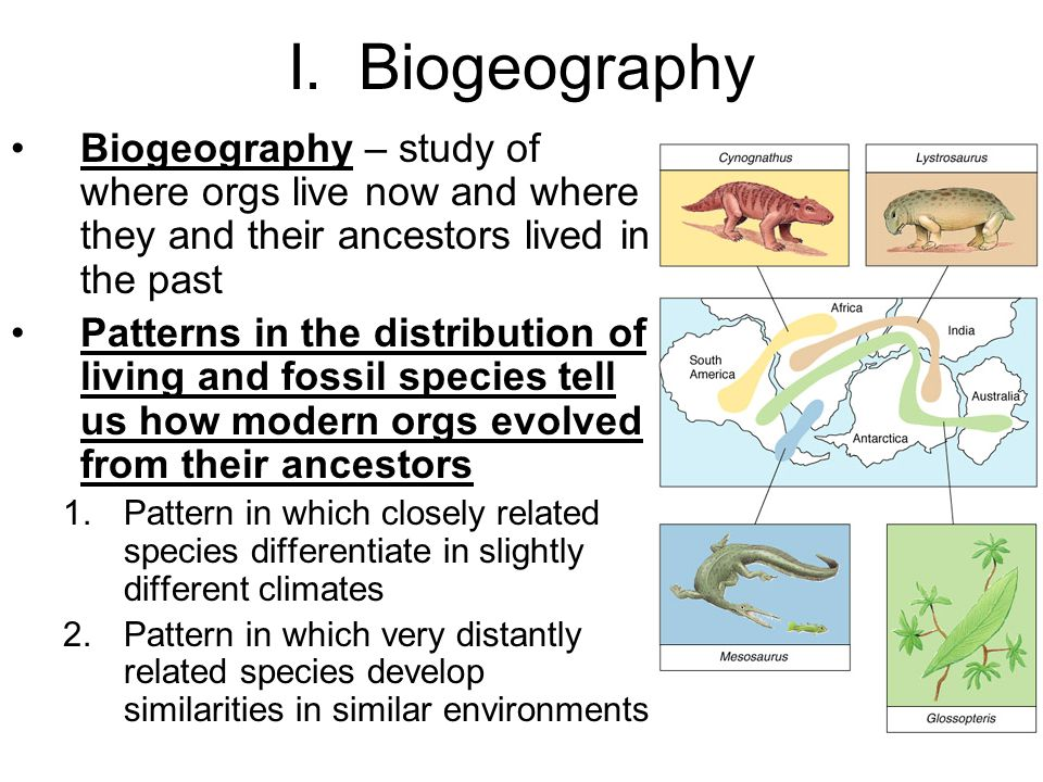 I. Biogeography Biogeography – study of where orgs live now and where they and their ancestors lived in the past.