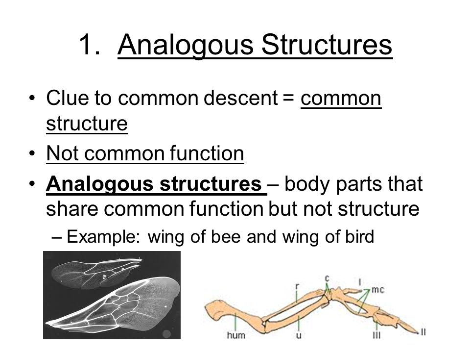 1. Analogous Structures Clue to common descent = common structure