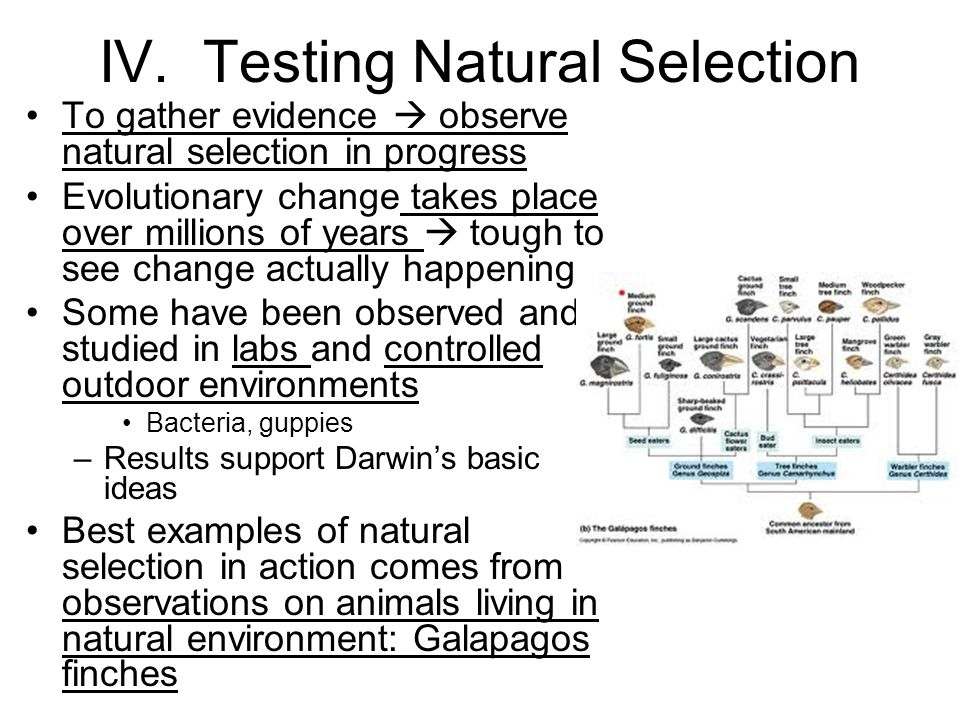 IV. Testing Natural Selection