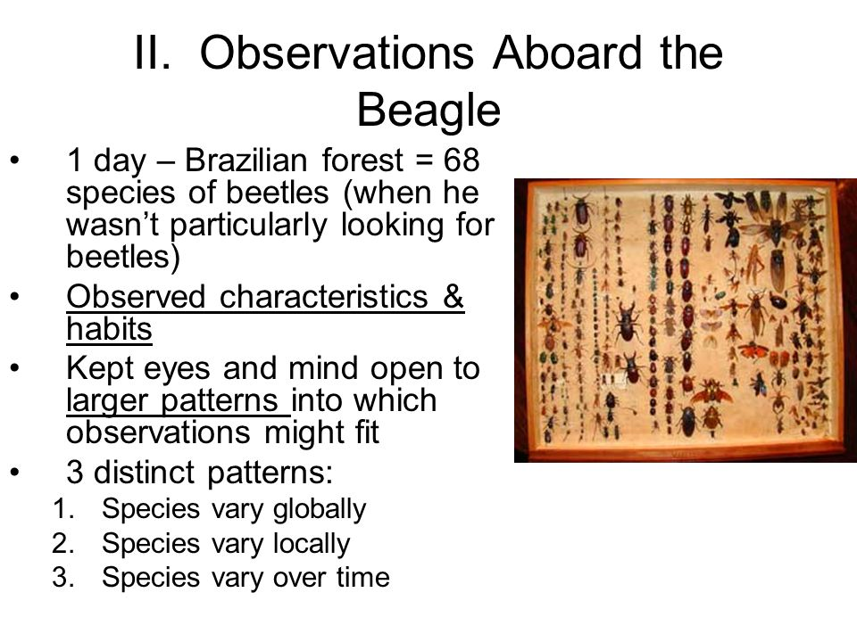 II. Observations Aboard the Beagle
