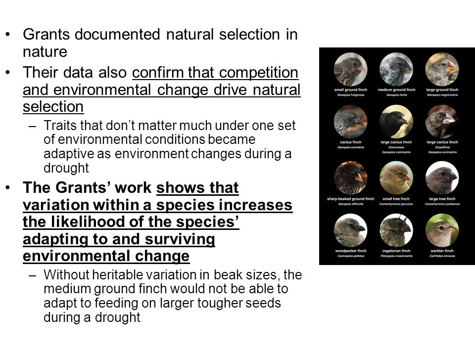 Grants documented natural selection in nature