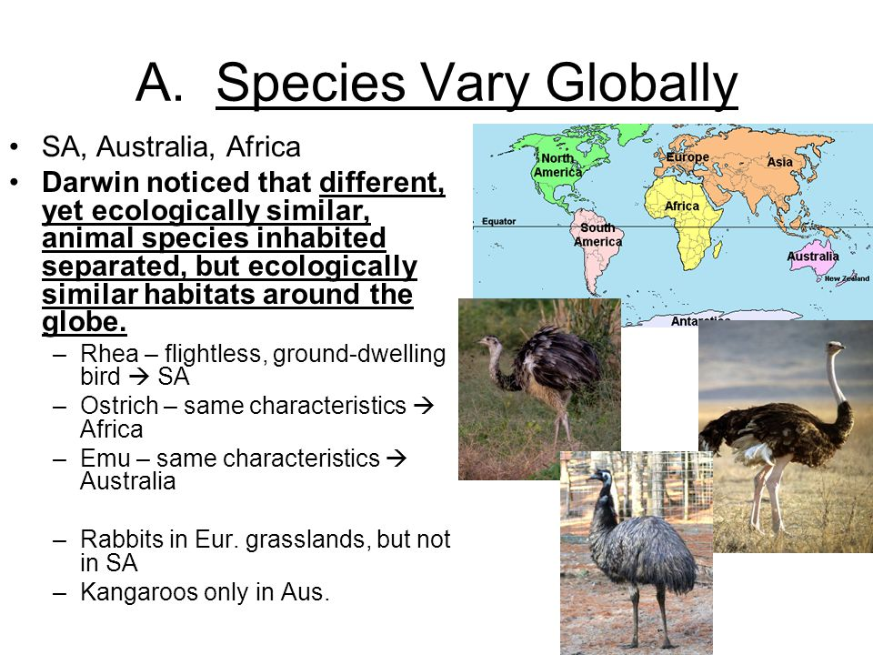 A. Species Vary Globally