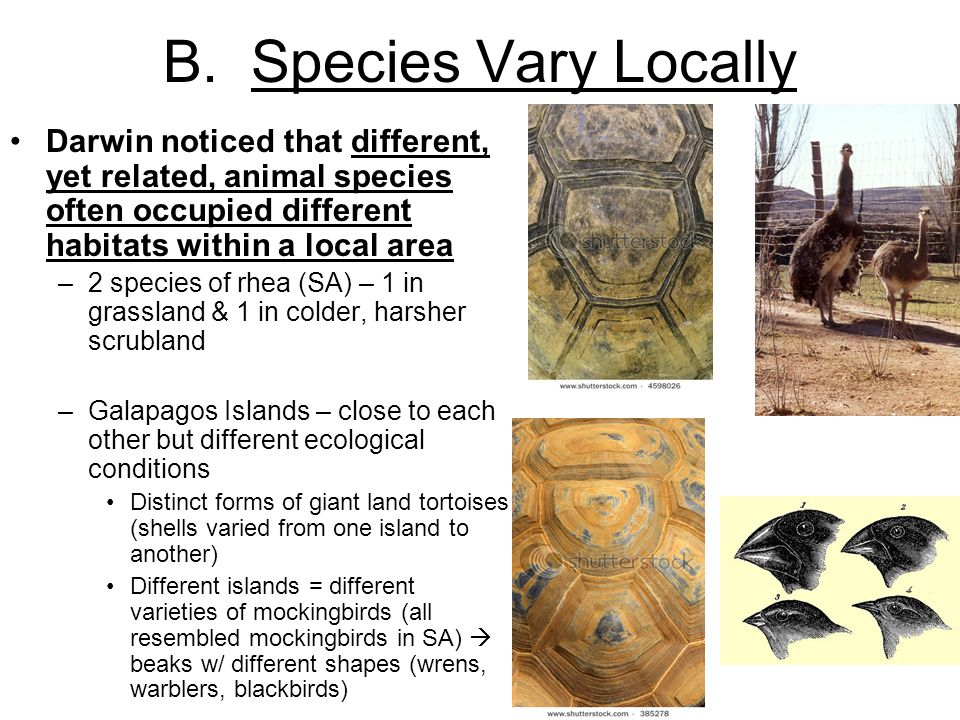 B. Species Vary Locally Darwin noticed that different, yet related, animal species often occupied different habitats within a local area.