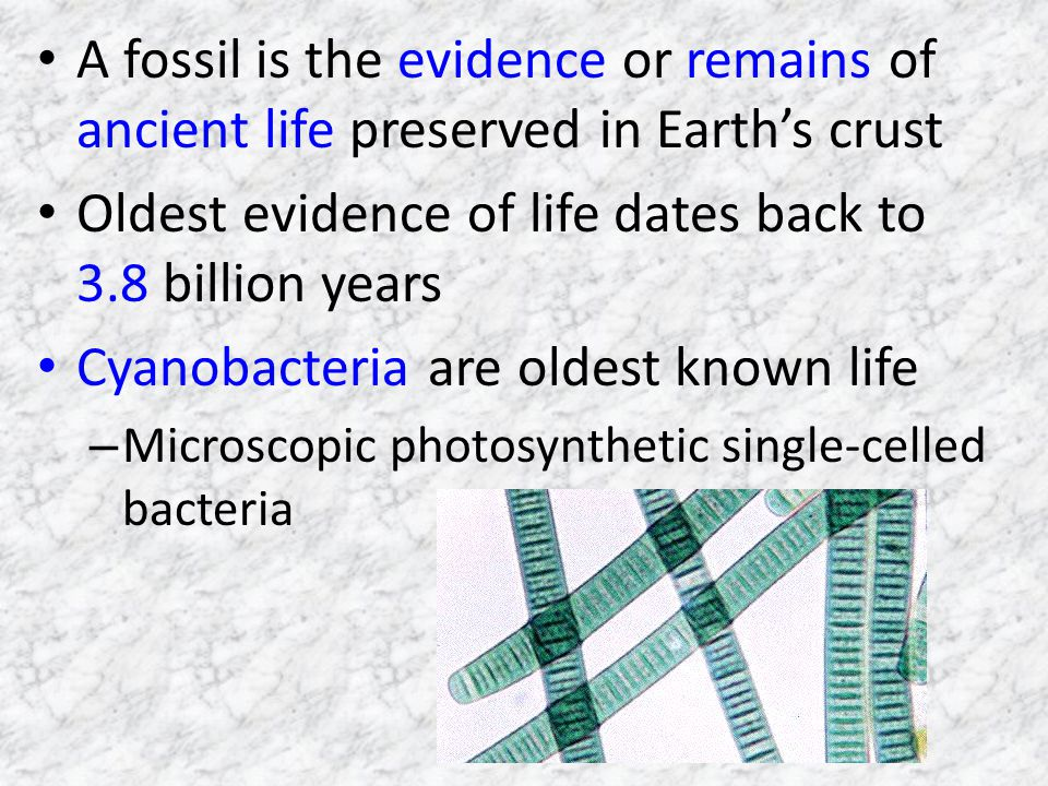 Oldest evidence of life dates back to 3.8 billion years