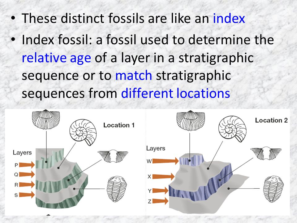 These distinct fossils are like an index