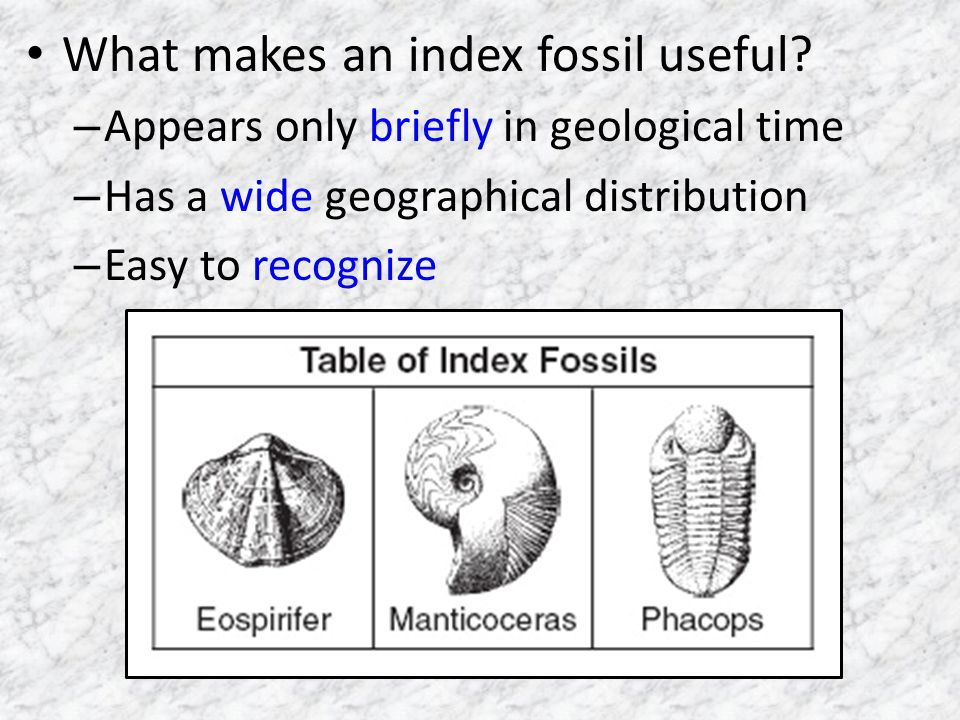 What makes an index fossil useful