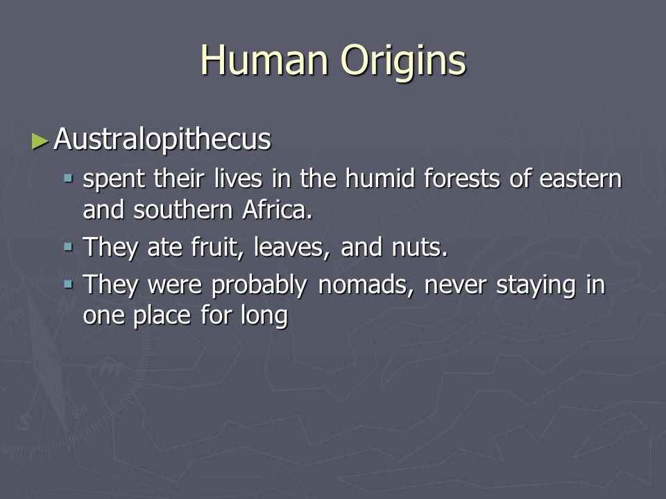 Human Origins Australopithecus