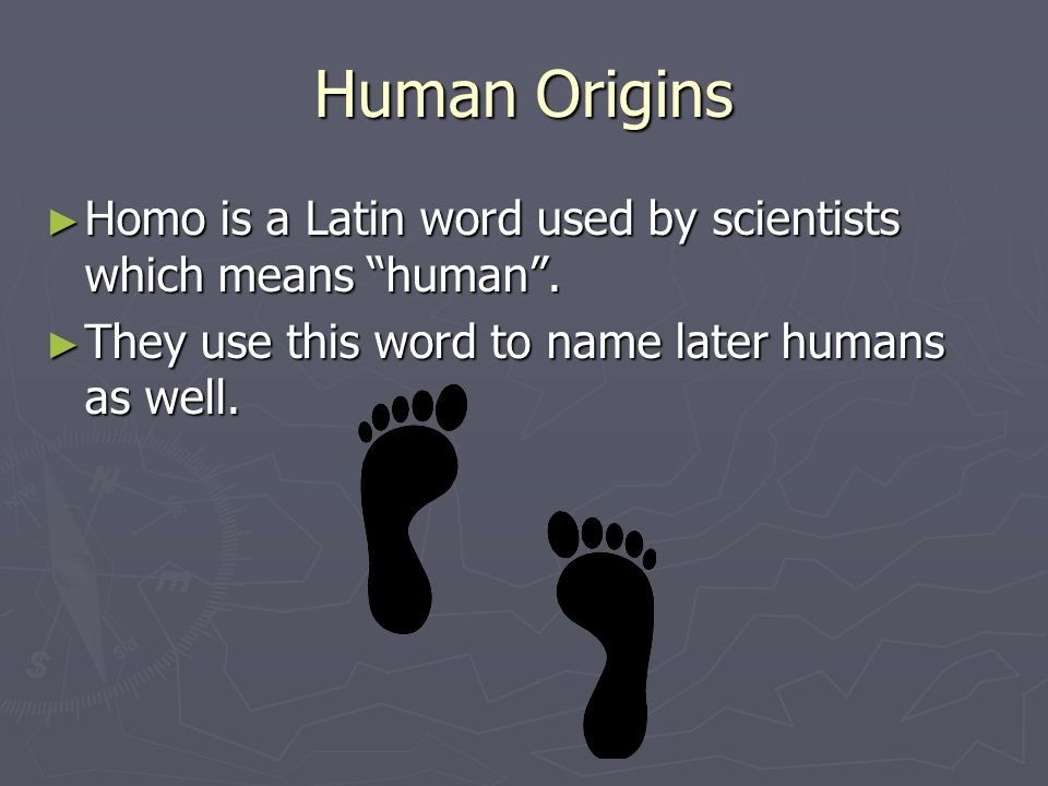 Human Origins Homo is a Latin word used by scientists which means human .