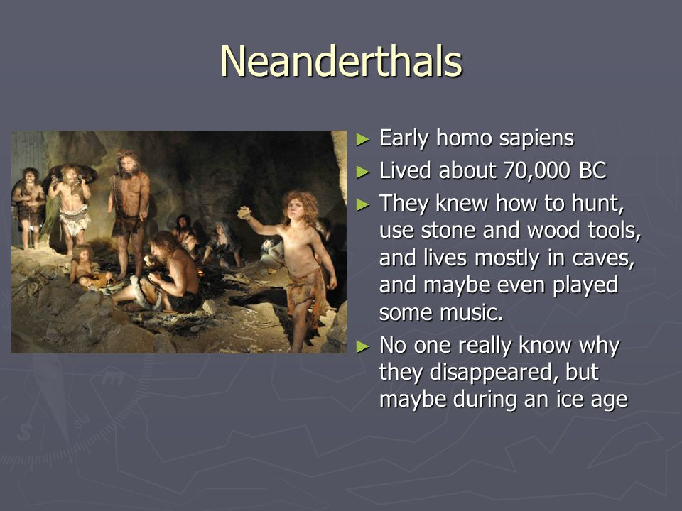 Neanderthals Early homo sapiens Lived about 70,000 BC
