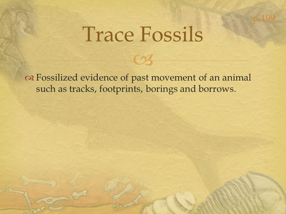 p.199 Trace Fossils.