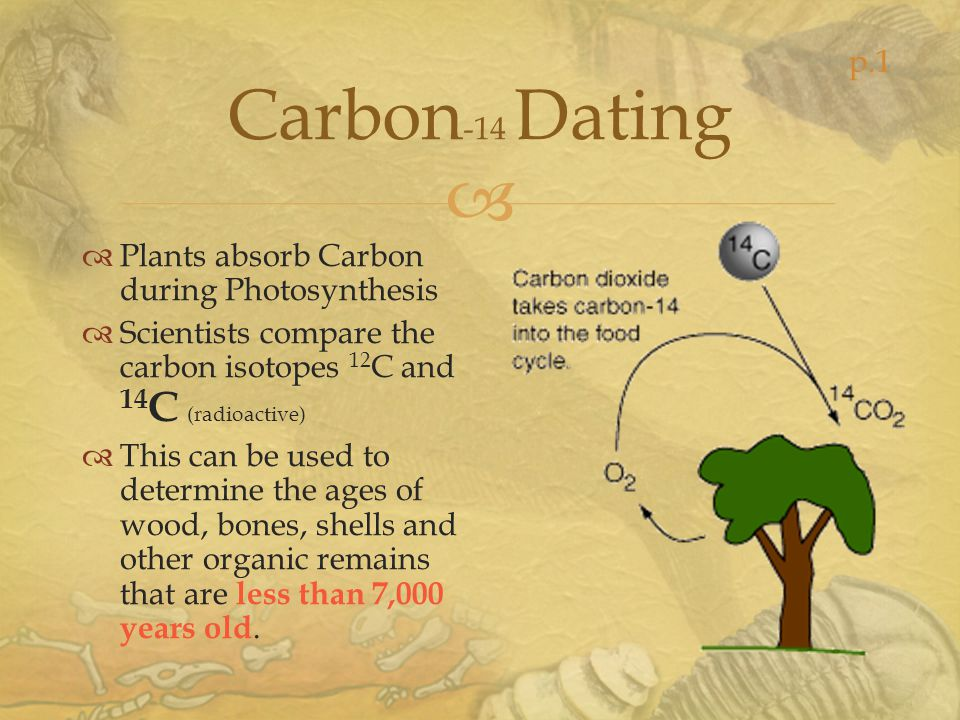 Carbon-14 Dating p.1 Plants absorb Carbon during Photosynthesis