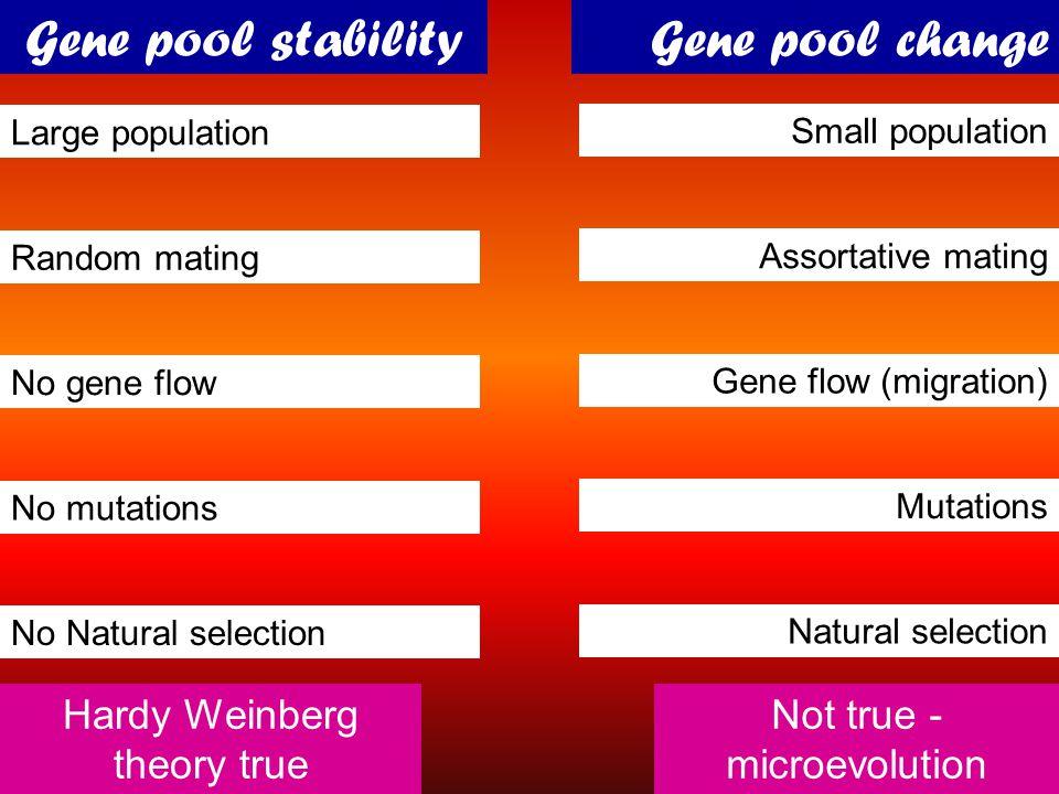 Gene pool stability Gene pool change Hardy Weinberg theory true