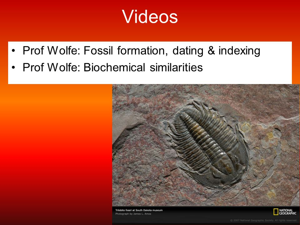 Videos Prof Wolfe: Fossil formation, dating & indexing