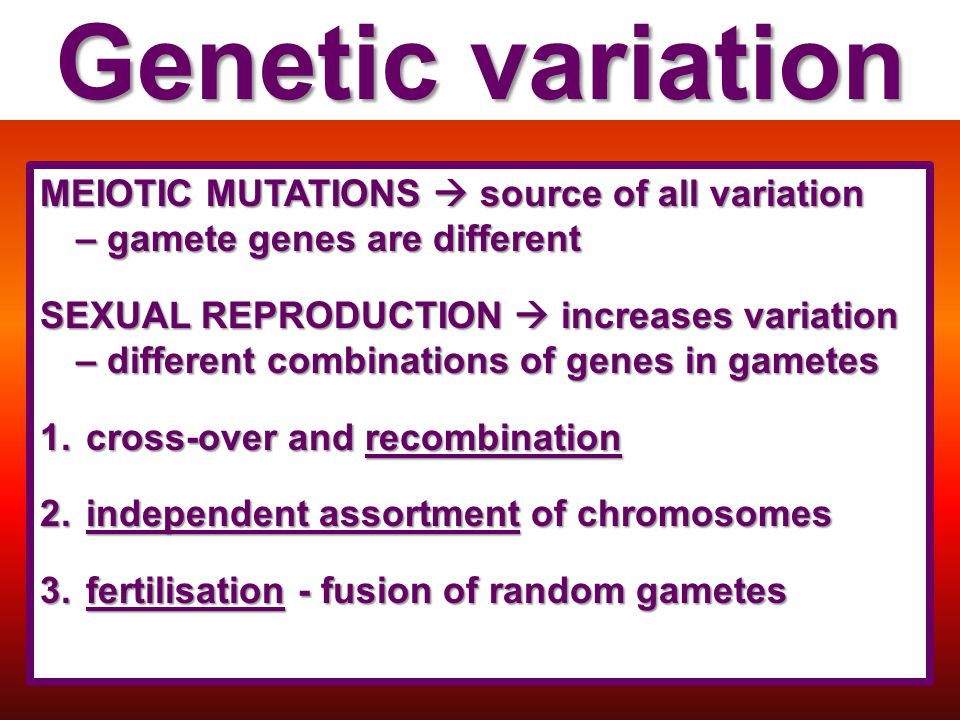 Genetic variation MEIOTIC MUTATIONS  source of all variation – gamete genes are different.