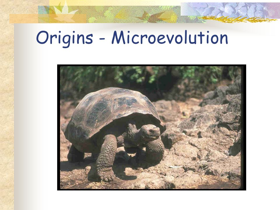 Origins - Microevolution