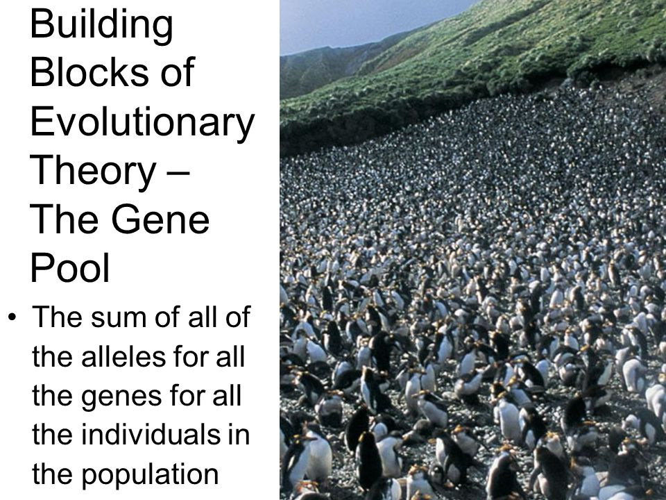 Building Blocks of Evolutionary Theory – The Gene Pool