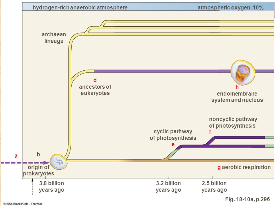 endomembrane system and nucleus
