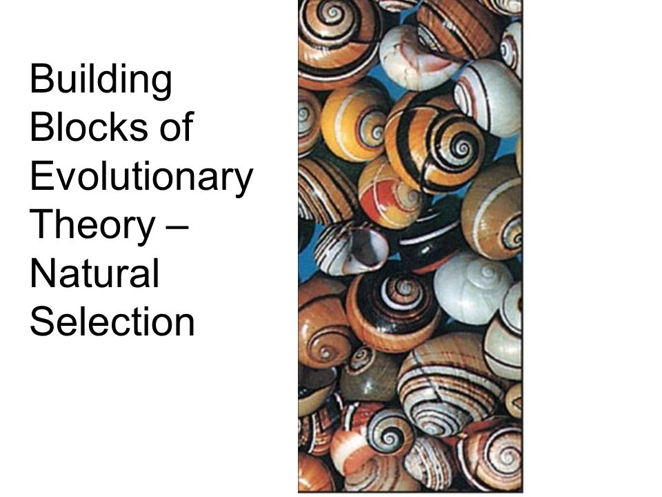 Building Blocks of Evolutionary Theory – Natural Selection