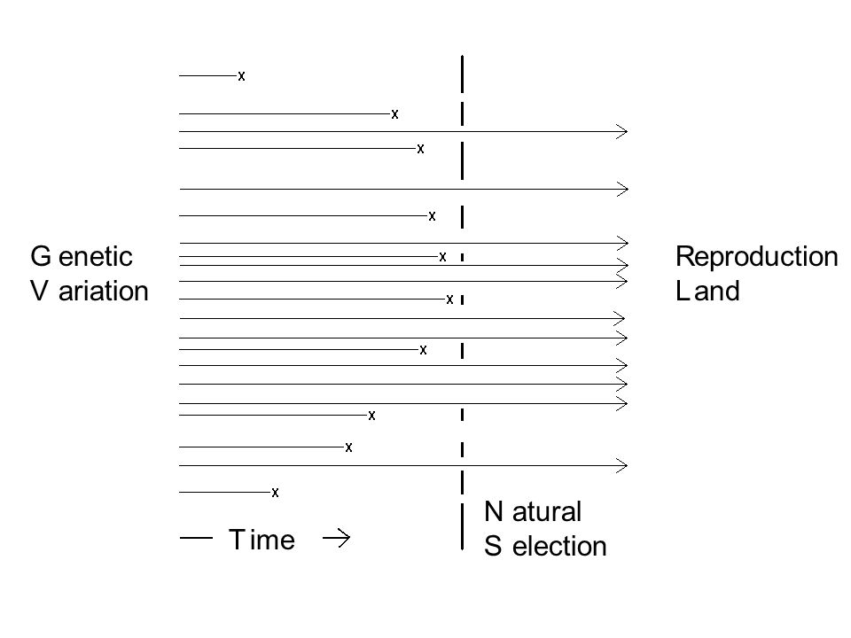 G V enetic ariation R L eproduction and N S atural election T ime