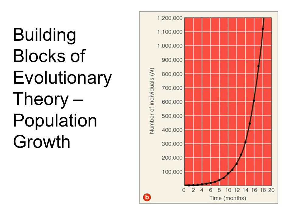 Building Blocks of Evolutionary Theory – Population Growth