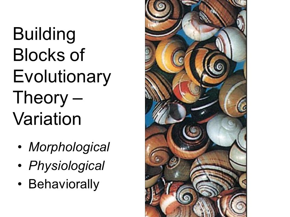 Building Blocks of Evolutionary Theory – Variation