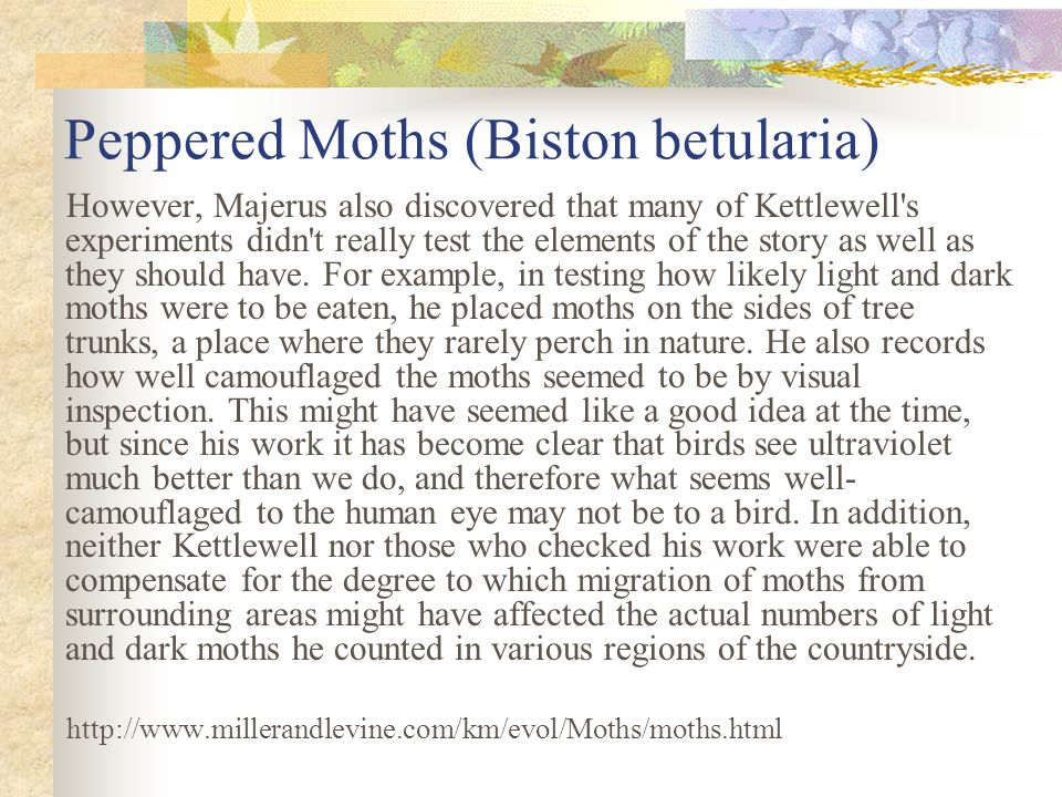 Peppered Moths (Biston betularia)