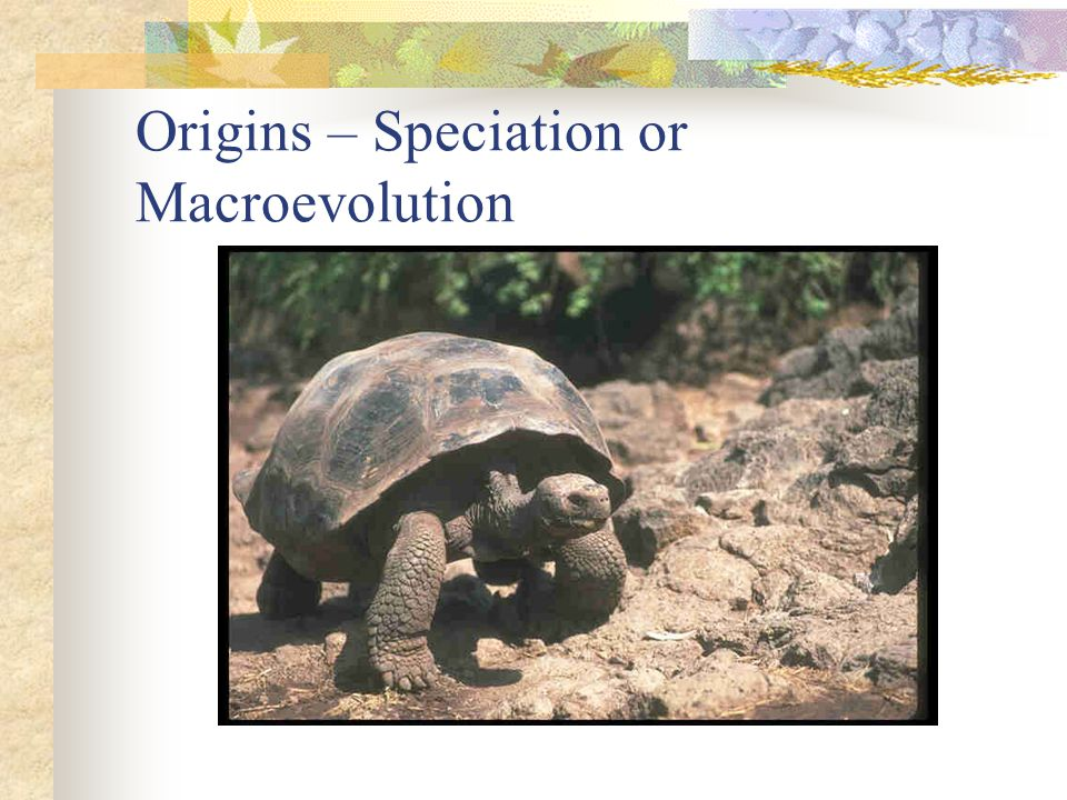 Origins – Speciation or Macroevolution