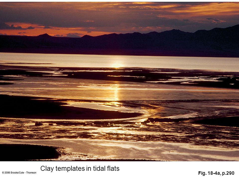 Clay templates in tidal flats