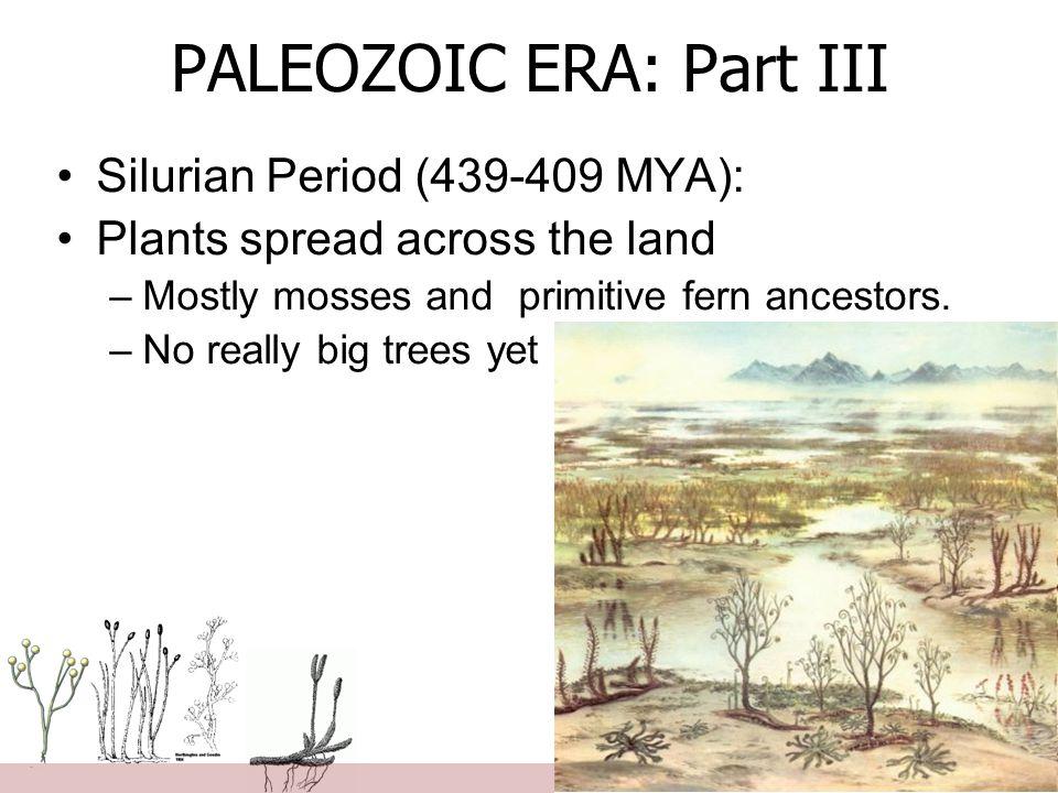 PALEOZOIC ERA: Part III