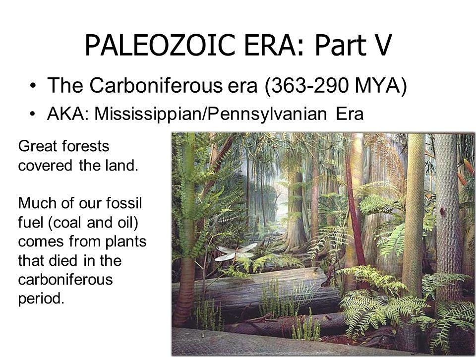 PALEOZOIC ERA: Part V The Carboniferous era (363-290 MYA)
