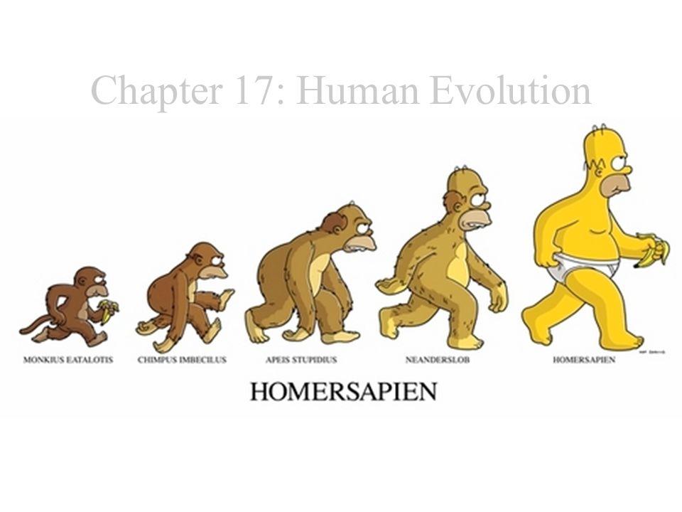Chapter 17: Human Evolution