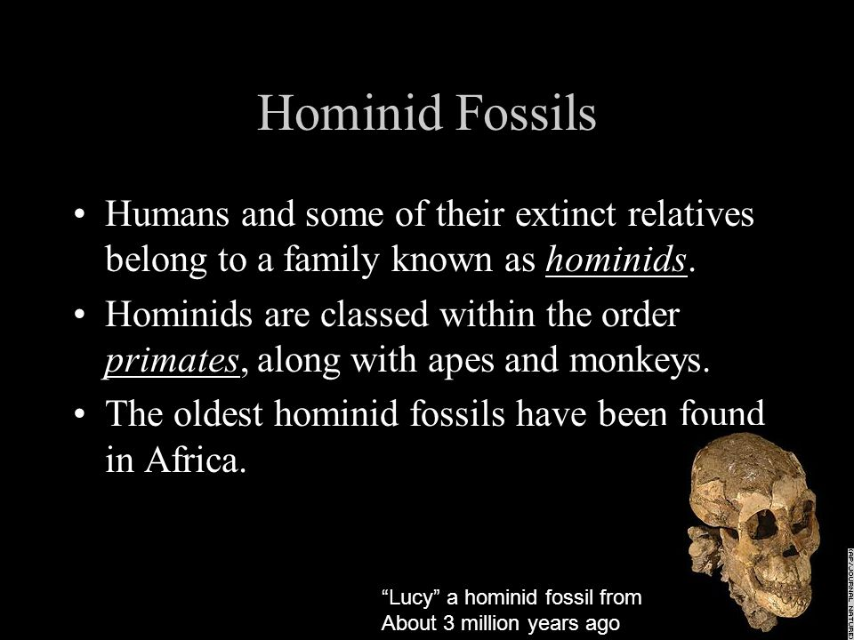 Hominid Fossils Humans and some of their extinct relatives belong to a family known as hominids.