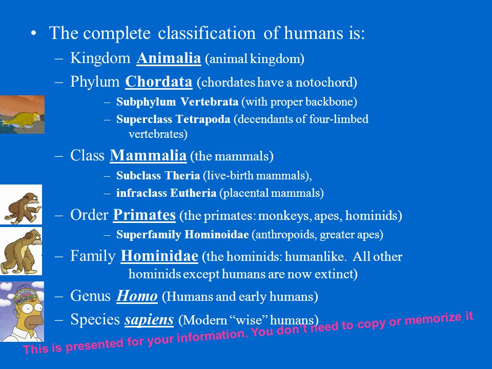 The complete classification of humans is: