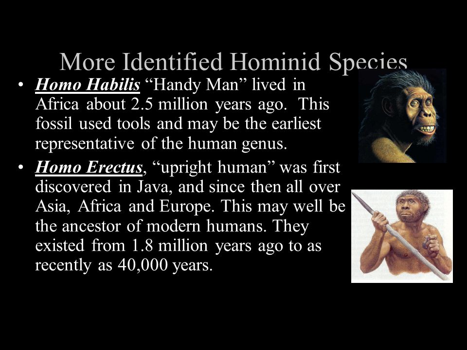 More Identified Hominid Species