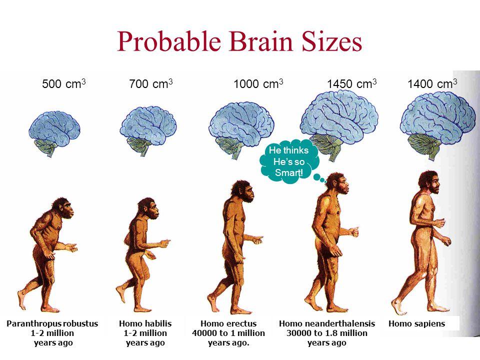 Paranthropus robustus Homo neanderthalensis