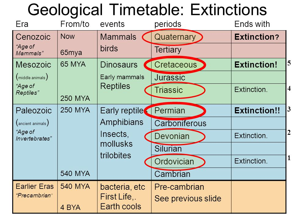 Geological Timetable: Extinctions