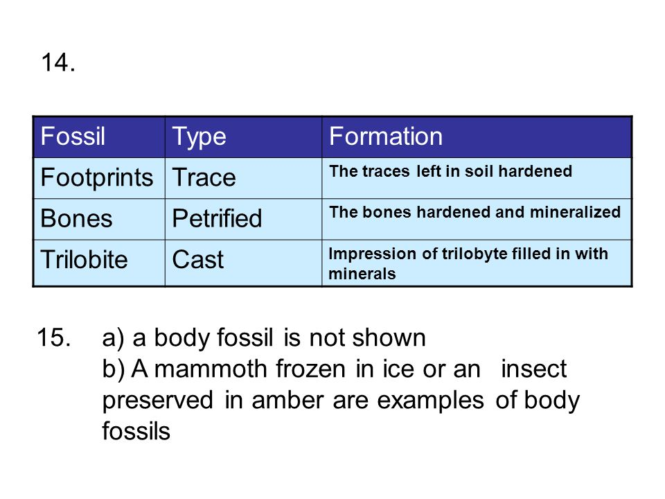15. a) a body fossil is not shown