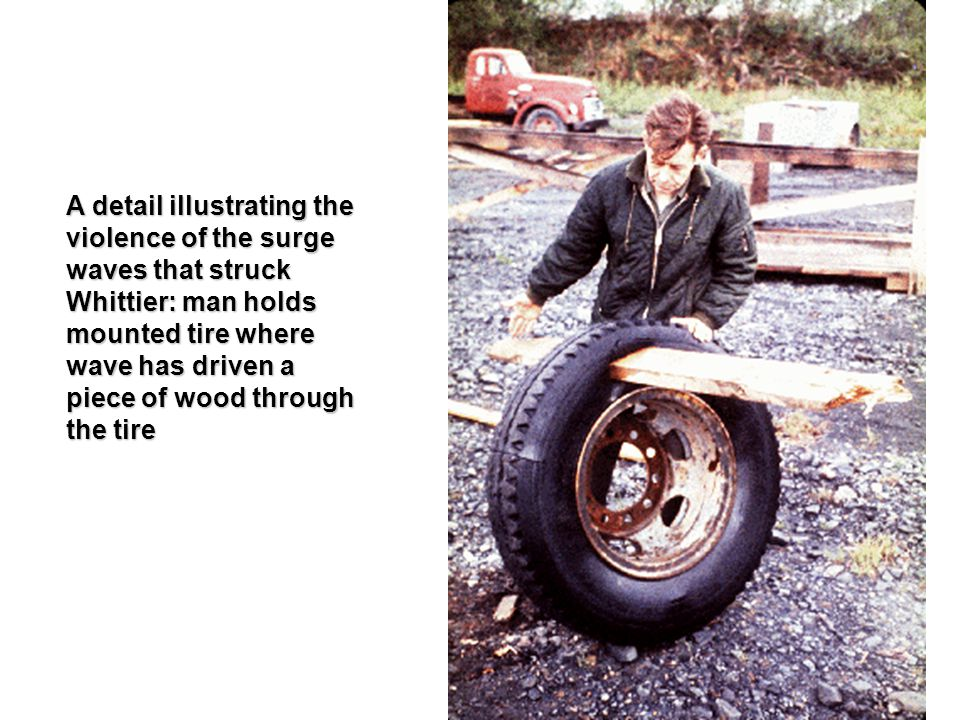 A detail illustrating the violence of the surge waves that struck Whittier: man holds mounted tire where wave has driven a piece of wood through the tire