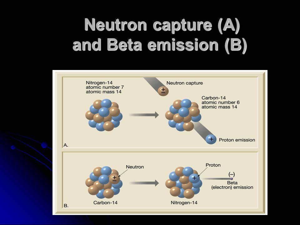 Neutron capture (A) and Beta emission (B)