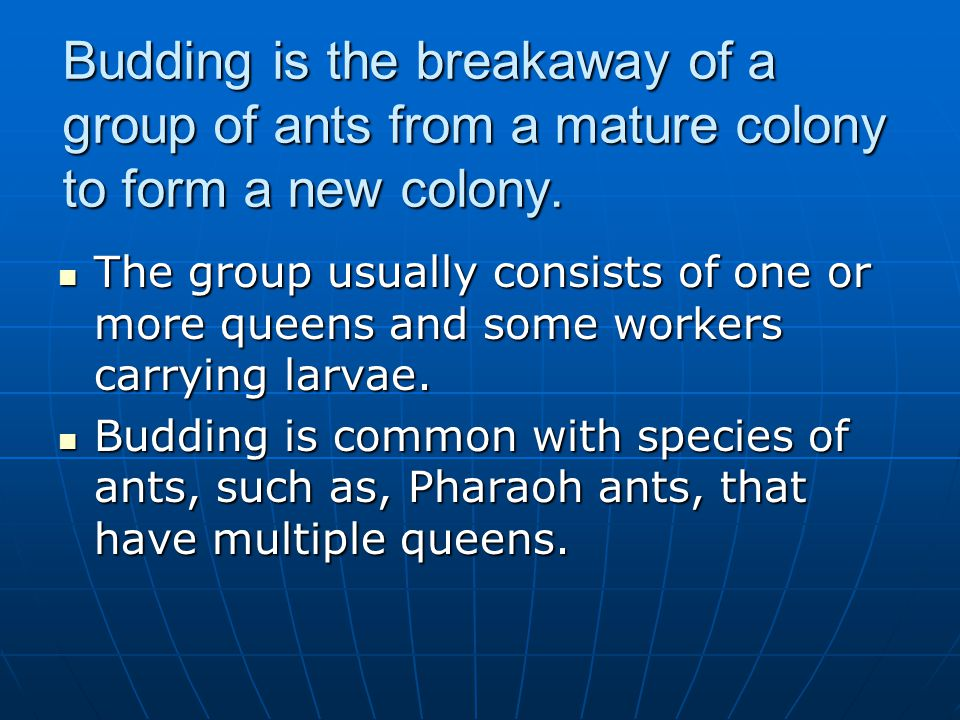 Budding is the breakaway of a group of ants from a mature colony to form a new colony.