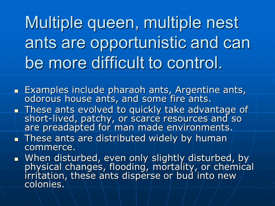 Multiple queen, multiple nest ants are opportunistic and can be more difficult to control.